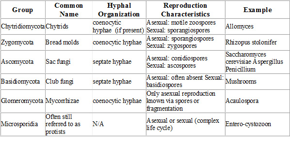 Chytridiomycota asexual reproduction